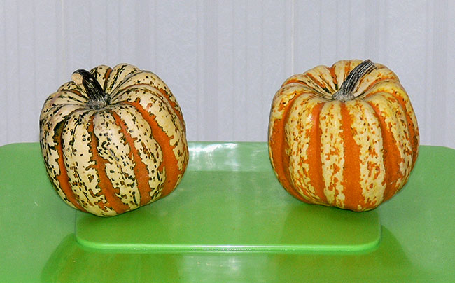 Calabazas para Halloween en tu colegio