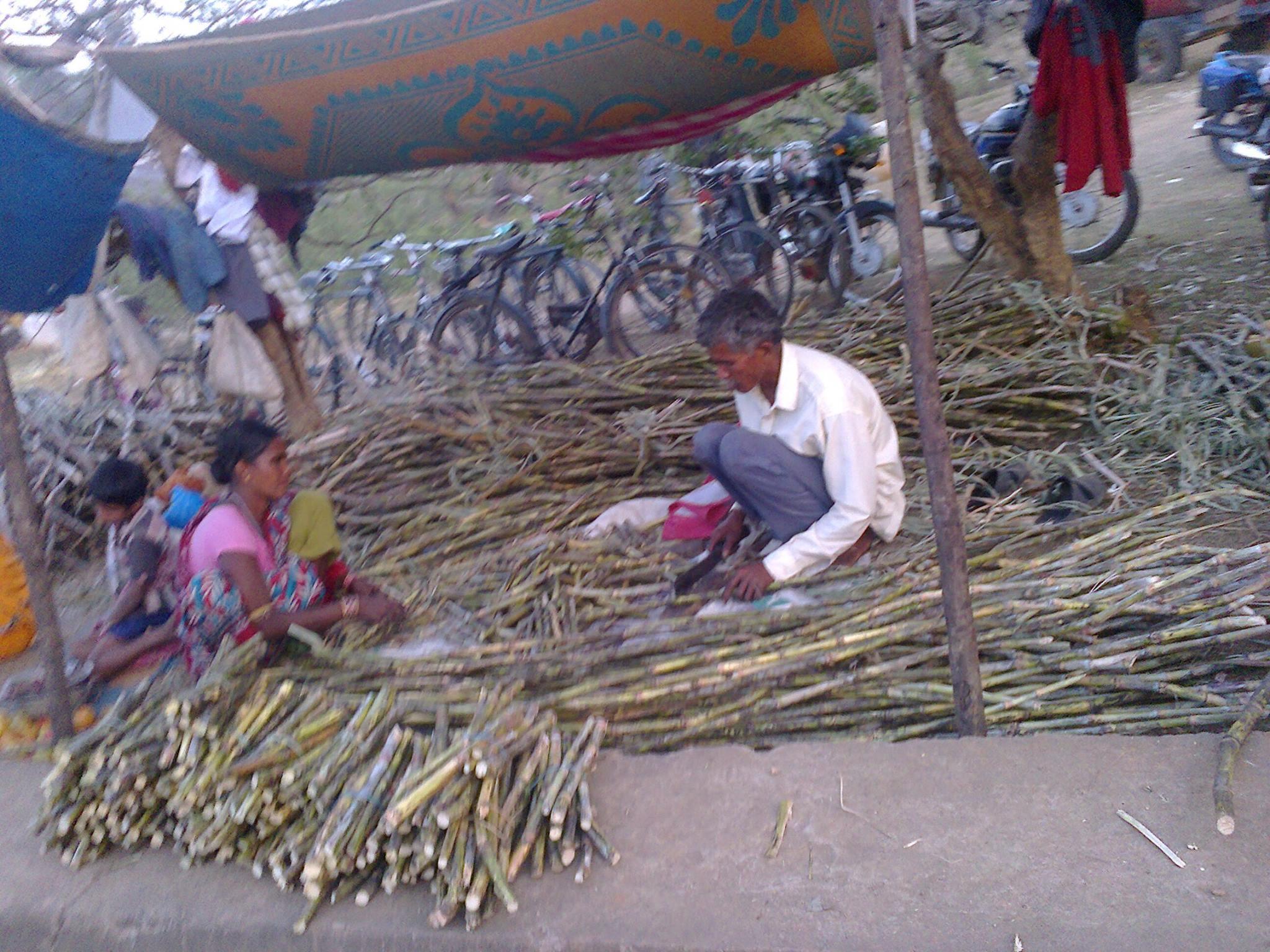 Nuevos cultivos en Kandhamal